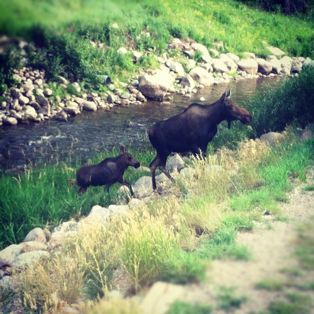 Wildlife in Vail, Colorado