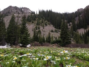 Pitkin rewards hikers with open fields like this one.