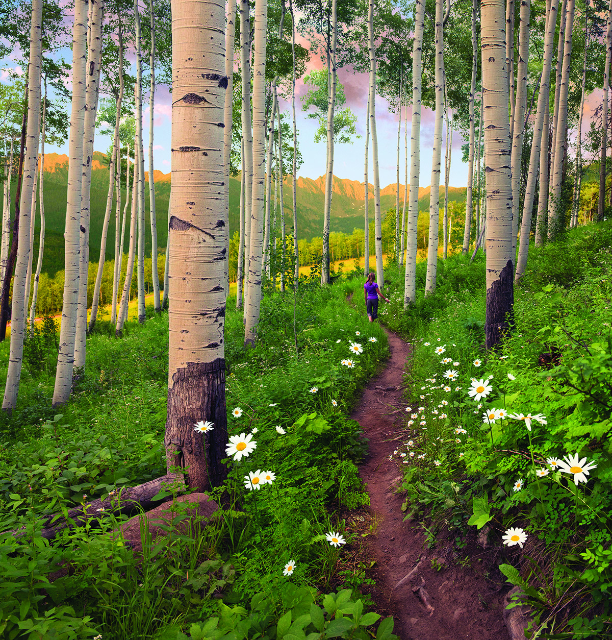 Berry Picker Trail Vail Colorado