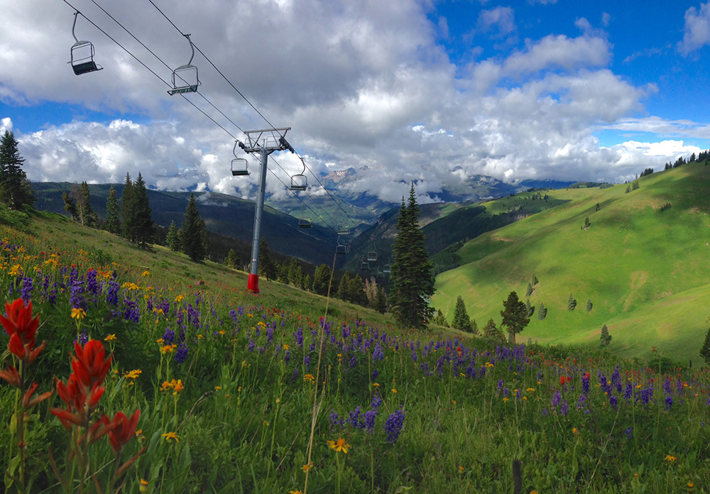 Vail back bowls in summer